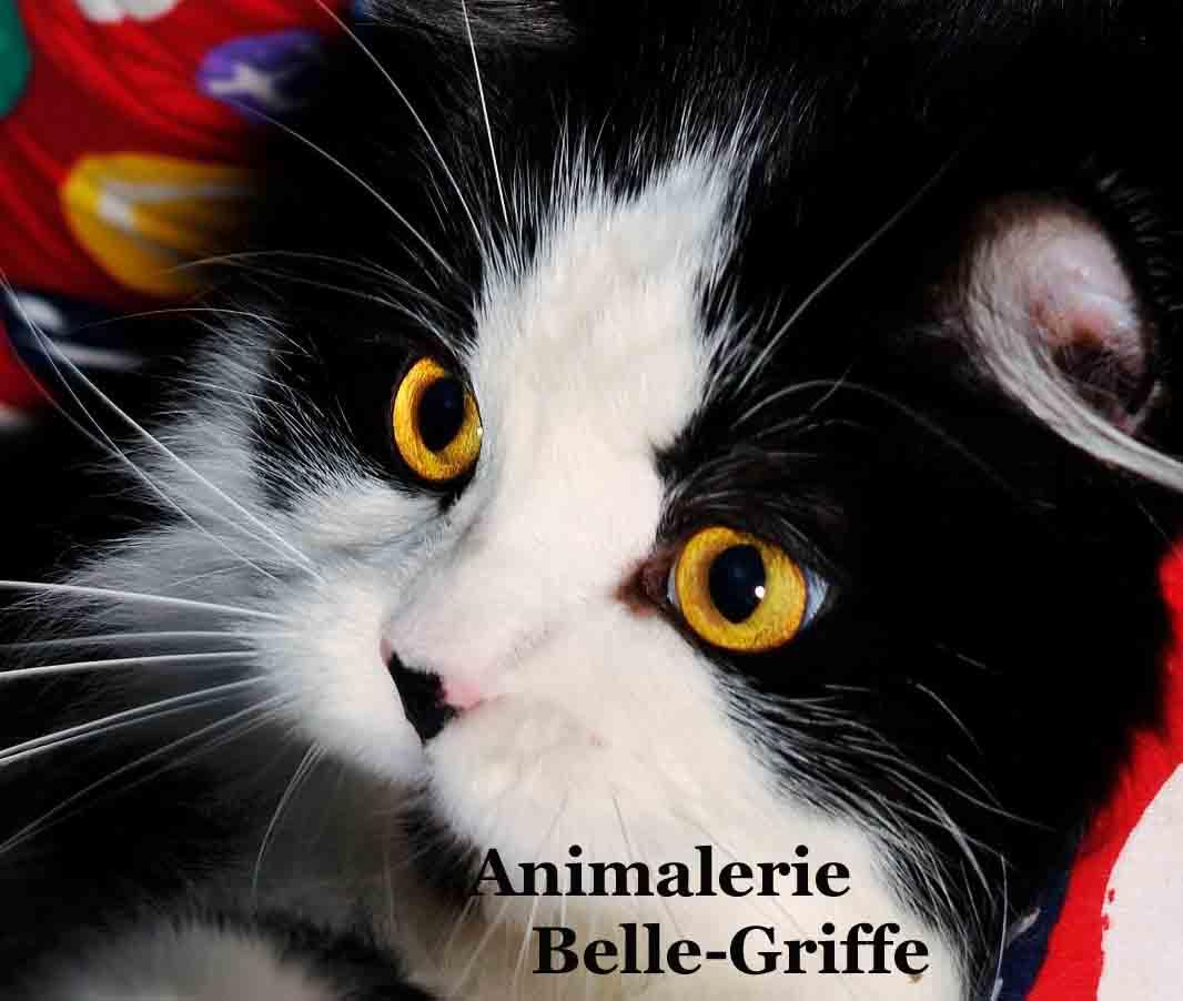Animalerie Belle-Griffe